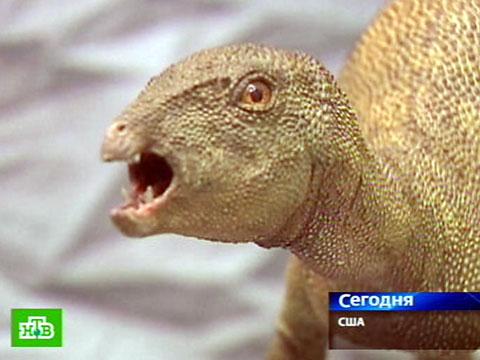Самый маленький динозавр был похож на большую куропатку.  RUSSIA.RU.